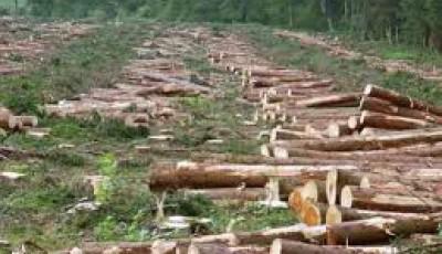 Hat év erdőírtás eredménye