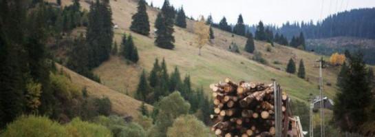 Házkutatások zajlanak a Schweighofer Holzindustrie-nél is