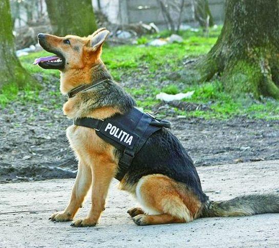 194 éves a Román Rendőrség