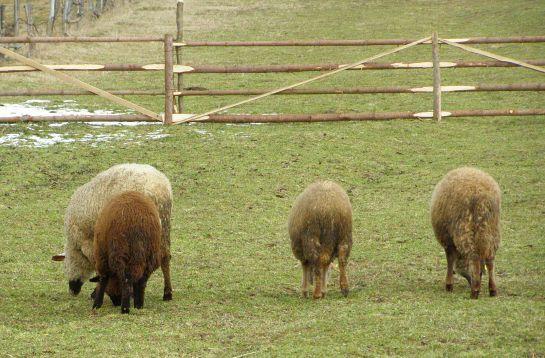 Támogatás az állattenyésztőknek