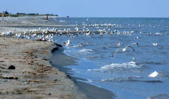 Ma van a Fekete-tenger nemzetközi napja