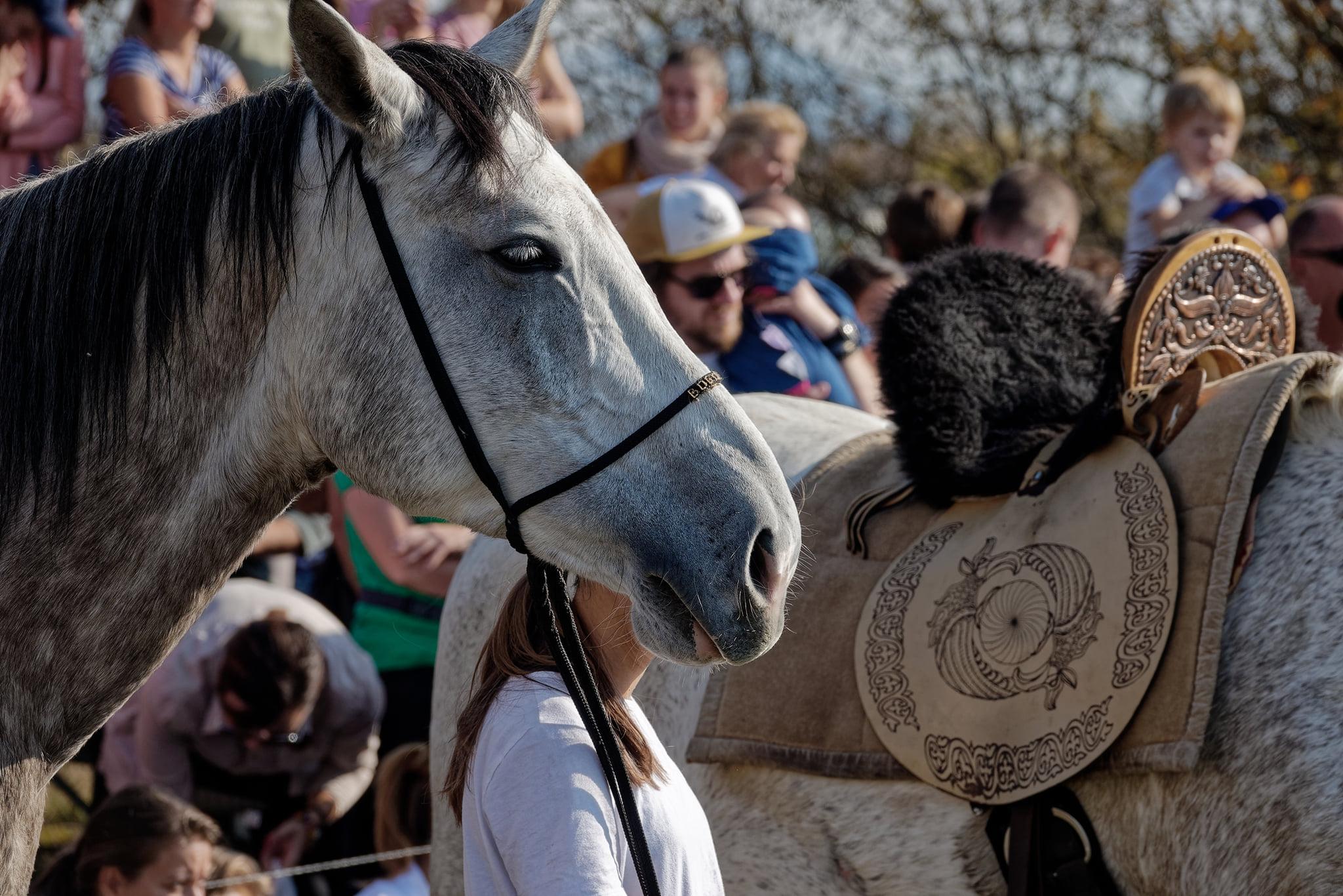 Felavatták az ország első lovasíjász pályáját