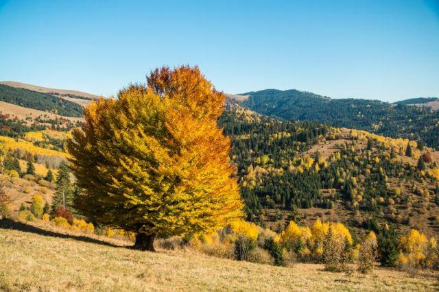 Új természetjáró kalauz & Összefogás Háza
