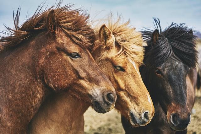 """A lovak nyelve és a """"negatív népszerűség""""(Sajtószemle, 2020. május 25.)"""
