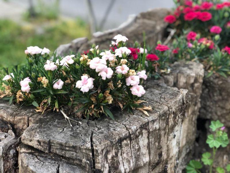 Virágföld a szelektív hulladékért