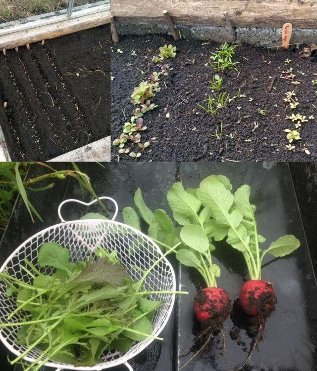 A kertből az asztalra