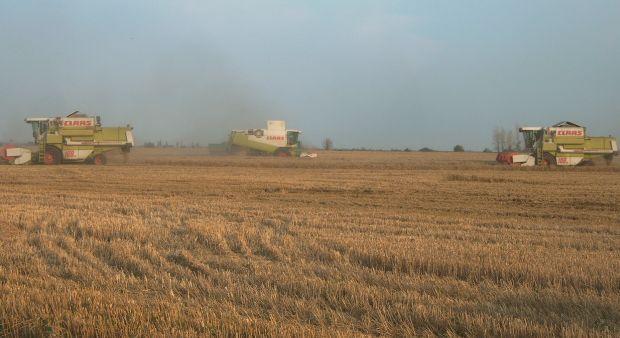 Kezdődik az aratás