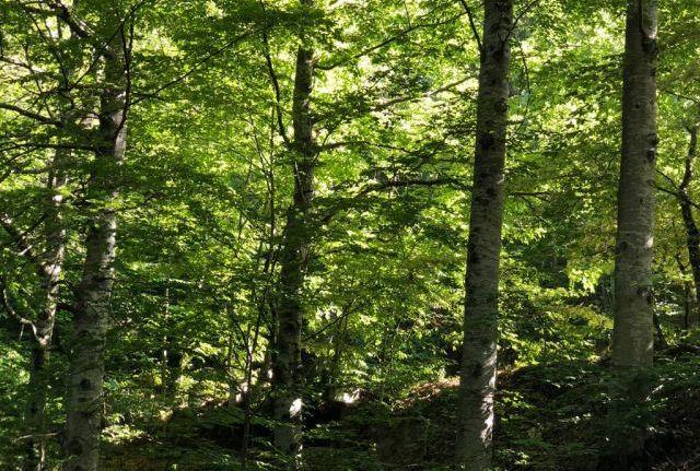 Európai átlag alatt az erdős területek Romániában