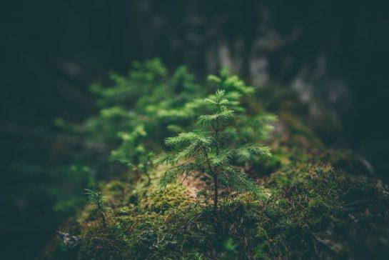 Módosult az erdészeti törvény