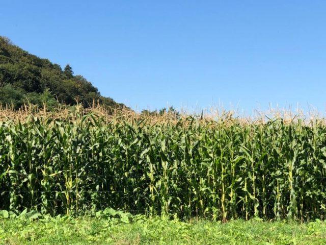 Mezőgazdasági károk az időjárás miatt