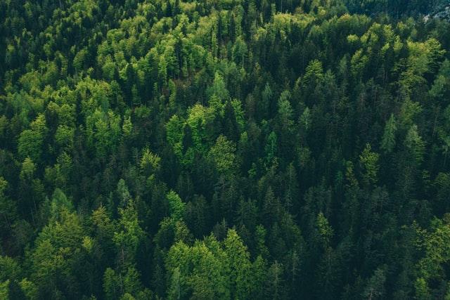 Elsőfokú ítélet az erdő-visszaszolgáltatások ügyében
