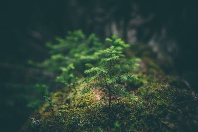 Uniós erdőstratégia
