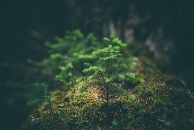 Megalakult az Országos Erdészeti Felügyelőség