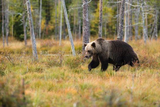 Mindennapi medvéink
