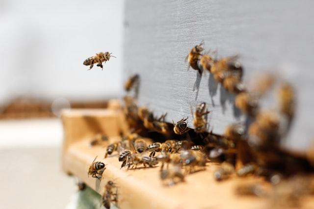 Augusztus 2-ig nyújthatják be a méhészek a kifizetési kéréseket