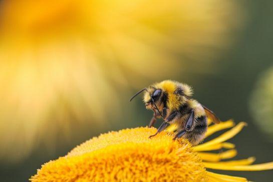 Támogatás méhészeknek